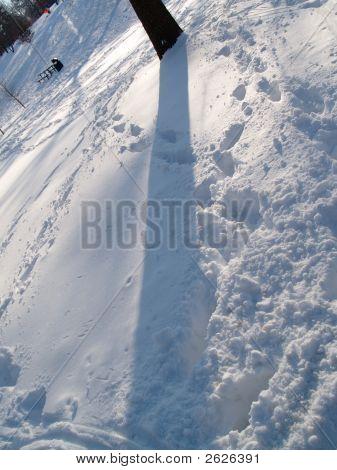 Snow Tree Shadow