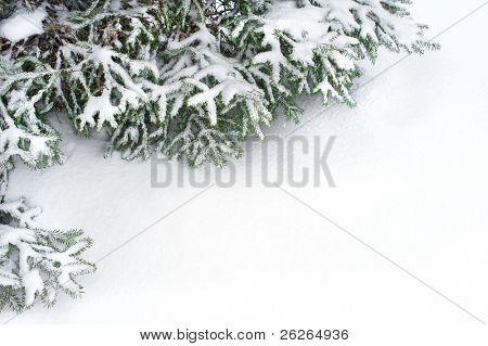 snow fir tree branches under snowfall. framework for text