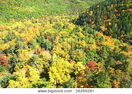 fall forest landscape of russian Primorye