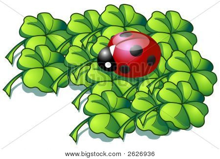 Illustrated Ladybird