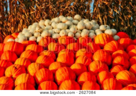 A Mound Of Pumpkins Ready To Buy
