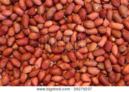 Amendoim Redskin