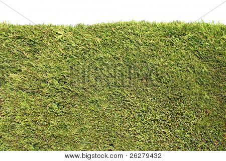 Neatly trimmed green hedge with a white background