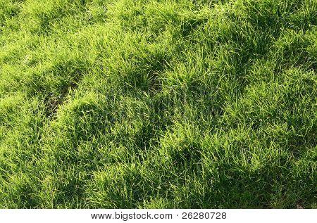 Long green grass background.
