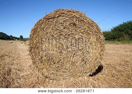 Round straw bale in a field.