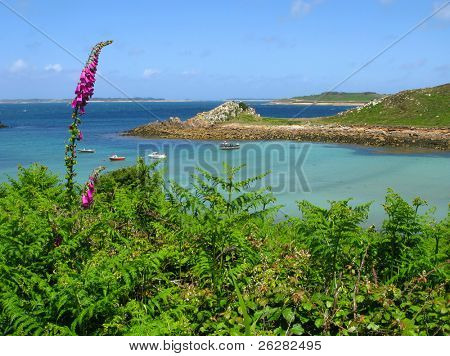 Wild foxglove and fern, St. Agnes and Gugh, Isles of Scilly.