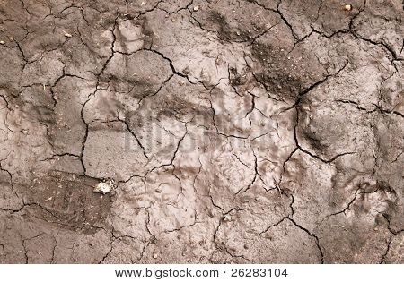 Wet mud cracks in a dried up river bed.