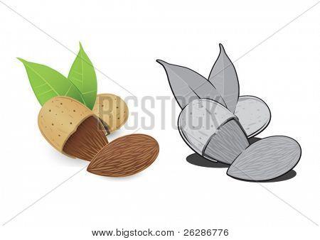 Nut almond.