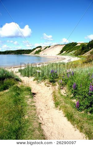Path to a Sandy Beach