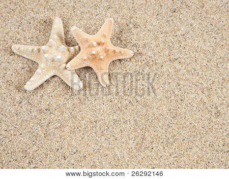estrela do mar na areia de praia - espaço de cópia