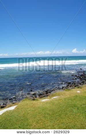Grren Grass Fringe Gold Coast Australia