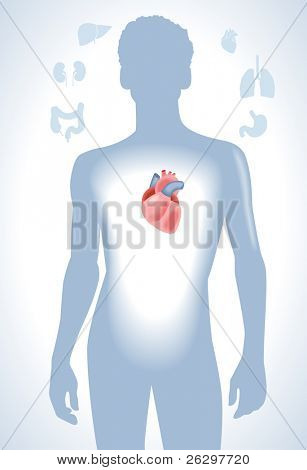 Set of human anatomy parts: liver, heart,  kidney, lung, stomach and esophagus