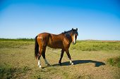 Horses On The Farm In Summer poster