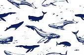 Seamless Pattern With Sea Animals. Whales Are Different Types Of Silhouettes And Drawings Doodle By  poster