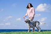 picture of english setter  - Strolling by - JPG