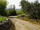 Rural Countryside Puglia Countryside With Dry Stone Walls And Olive Trees poster
