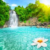 stock photo of jungle flowers  - Beautiful lotus flower in waterfall pool - JPG