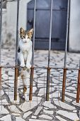 Cat Looks Out From Behind The Fence. Cute Cat. Montenegro. poster