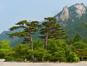 foto of seoraksan  - famous pair pines  - JPG