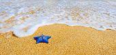 Постер, плакат: Голубая звезда моря на песчаном пляже против волны