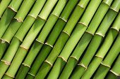 Green Bamboo Stems As Background, Top View poster