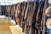 Fur Coats On Hangers. Fur Store. Fur Coats In A Row. poster