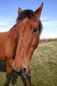 pic of horses eating  - A friendly horse looking at the camera - JPG