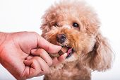Hand Feeding Pet Dog With Chewable To Protect From Heartworm poster