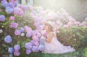 Little Girl Sitting In Bushes Of Hydrangea Flowers In Sunset Garden. Flowers Are Pink, Blue, Lilac A poster