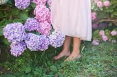 Little Girl Is In Bushes Of Hydrangea Flowers In Garden. Flowers Are Pink, Blue, Lilac And Blooming  poster