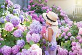 Little Girl Is In Bushes Of Hydrangea Flowers In Sunset Garden. Flowers Are Pink, Blue, Lilac And Bl poster