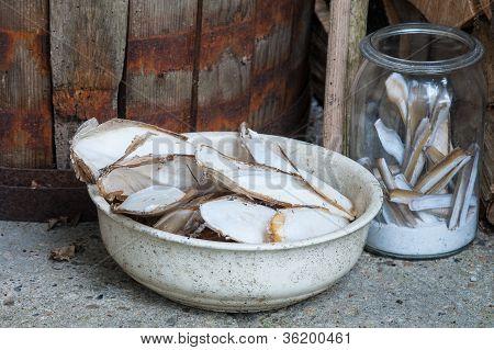 Shells In A Yar
