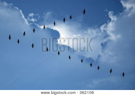 Flying in-formation