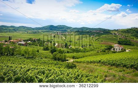 View on Vines