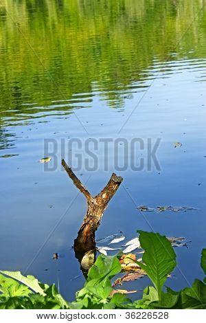 Wooden Slingshot In Water