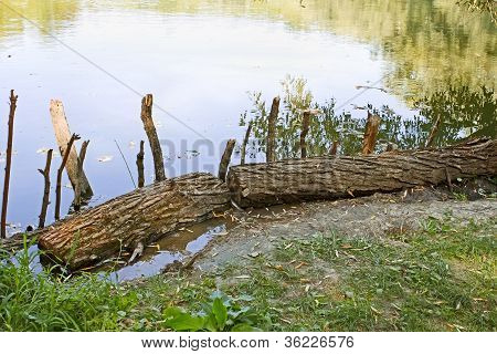 Wooden Logs On The Bank