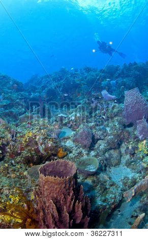 Underwater Photographer Lighting Up A St Lucia Reef