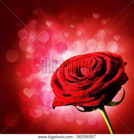 Abstract Purple Backgrounds With Red Rose Abd Beauty Bokeh