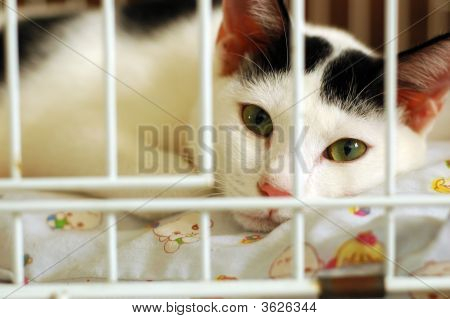 Bored Kitty In Cage