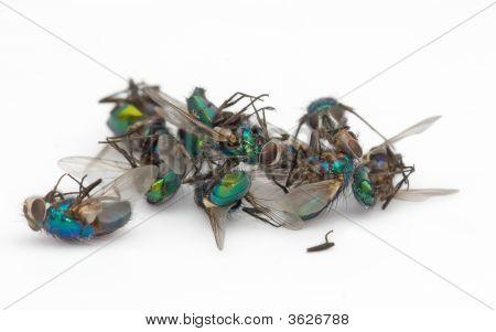Dead Fly Pile