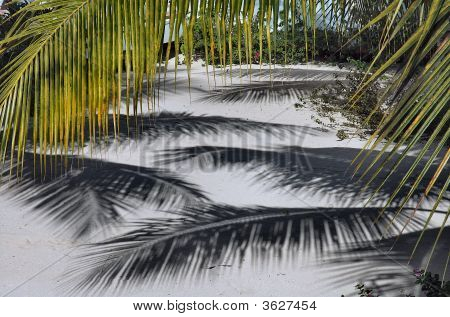 Palm Tree Shadows On Sand