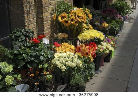 Florist in Southwark abzuholen. London. UK