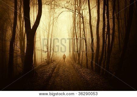 Man Walking In A Dark Forest With Fog