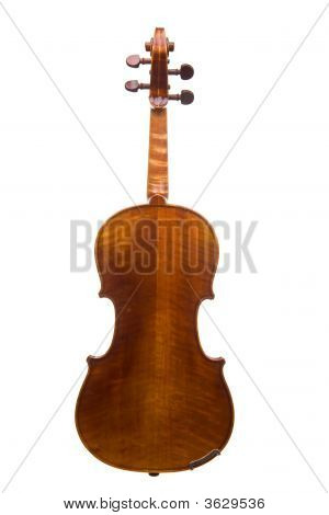 Violin Back View