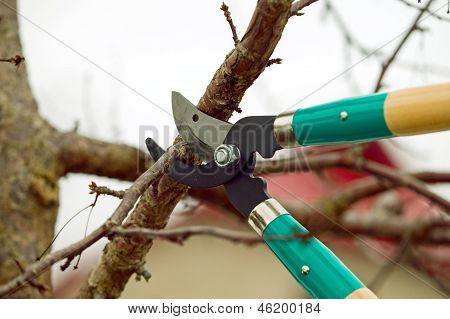 Cutting Branches From Tree With Scissors