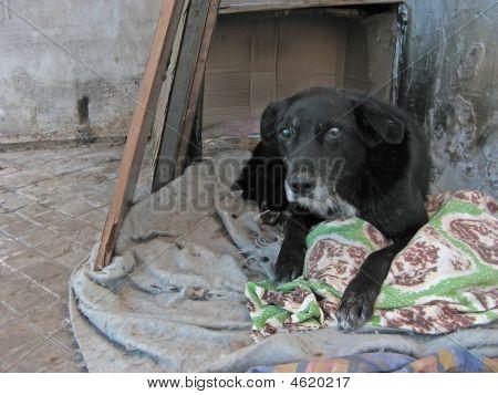 Beggar Dog