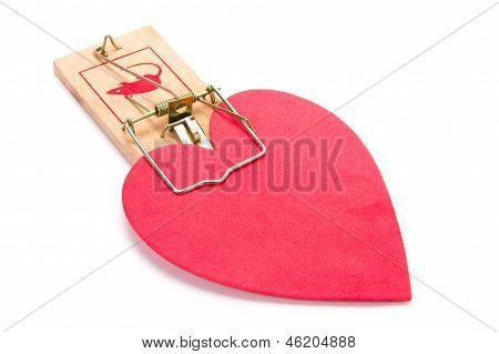 Love Trap!