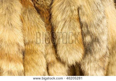 Closeup of beautiful fur
