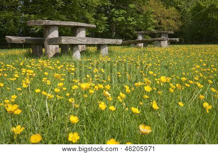 Picnic Tables In Blooming Meadow