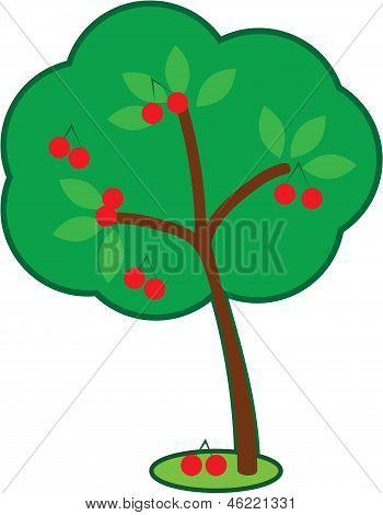 Hübsch Kirschenbaum